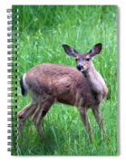Grassy Doe Spiral Notebook