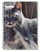 Gray Cat In Woods Spiral Notebook