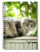 Gray Cat Sitting On A Balcony Spiral Notebook