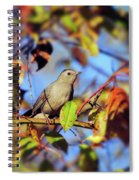 Gray Catbird Framed By Fall Spiral Notebook