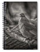 Gray Catbird Spiral Notebook
