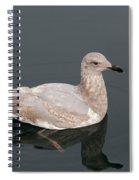 Gray Gull Reflection Spiral Notebook