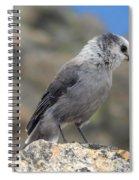 Gray Jay Spiral Notebook