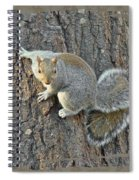 Gray Squirrel - Sciurus Carolinensis Spiral Notebook