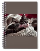 Gray Tabby With White Quilted Throw Spiral Notebook