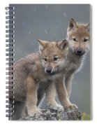 Gray Wolf Canis Lupus Pups In Light Spiral Notebook
