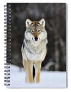 Gray Wolf In The Snow Spiral Notebook