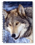 Gray Wolf Spiral Notebook