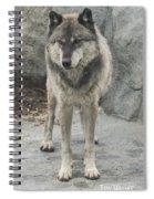Gray Wolf Stare Spiral Notebook
