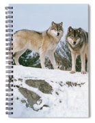 Gray Wolves Canis Lupus In A Forest Spiral Notebook