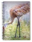 Grazin' In The Grass Spiral Notebook