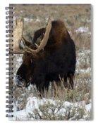 Grazing Bull Moose Spiral Notebook