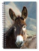 Grazing Burros Spiral Notebook