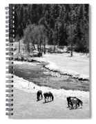 Grazing Bw Spiral Notebook