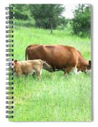 Grazing Cow And Calf Spiral Notebook