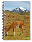 Grazing Guanaco In Patagonia Spiral Notebook