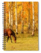 Grazing Horse In The Autumn Pasture Spiral Notebook