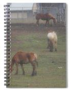 Grazing Horses Spiral Notebook