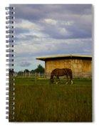 Grazing In Bridgehampton - New York Spiral Notebook