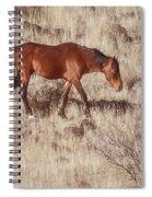 Grazing In The Winter Grass Spiral Notebook