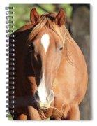 Grazing Mare  Spiral Notebook