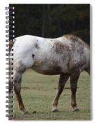 Grazing Time Spiral Notebook