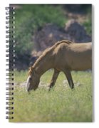 Grazing Wild Mustang  Spiral Notebook