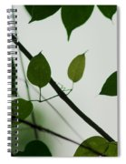 Green Leaves 2 Spiral Notebook
