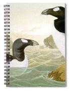 Great Auk (alka Impennis): Spiral Notebook
