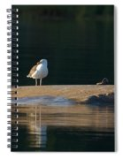 Great Black-backed Gull  Spiral Notebook