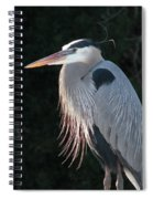 Great Blue At Rest Spiral Notebook