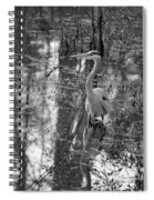 Great Blue Heron And Reflection-black And White Spiral Notebook