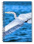 Great Blue Heron Flight Spiral Notebook