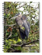 Great Blue Heron In A Tree Spiral Notebook
