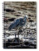 Great Blue Heron In Galapagos Spiral Notebook