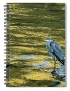 Great Blue Heron On A Golden River Spiral Notebook
