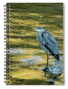 Great Blue Heron On A Golden River Vertical Spiral Notebook