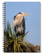 Great Blue Heron On Nest In A Palm Tree Spiral Notebook
