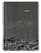 Great Blue Heron Wading 1 Spiral Notebook
