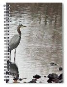 Great Blue Heron Wading 2 Spiral Notebook