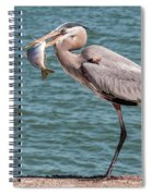 Great Blue Heron Walking With Fish #2 Spiral Notebook