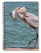 Great Blue Heron Walking With Fish #3 Spiral Notebook