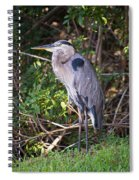 Great Blue Just Chillin' Spiral Notebook
