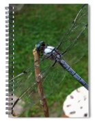 Great Blue Skimmer Spiral Notebook