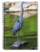 Great Blue Wading The Tuck Spiral Notebook