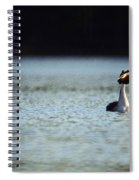 Great Crested Grebe Spiral Notebook
