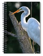 Great Egret At Rest Spiral Notebook