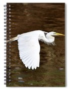 Great Egret In Flight Spiral Notebook