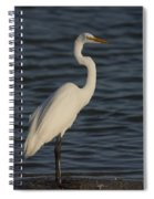 Great Egret In The Last Light Of The Day Spiral Notebook