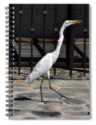 Great Egret In The Neighborhood Strutting 1 Spiral Notebook